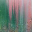 """Flowers in the Field, 36 x 48"""", $600"""